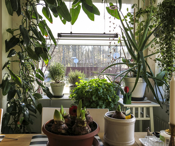 plants, kitchen, kitchenwindow