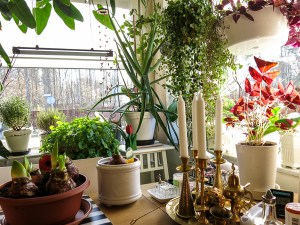 plants, kitchen, kitchenwindows
