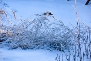 winer, snow, grass