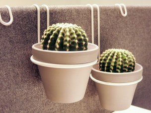Cactus hanging on the dividers for an office