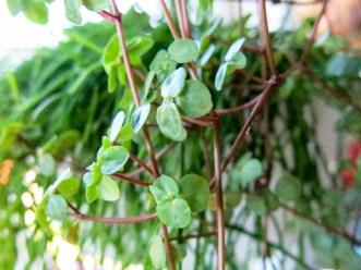 plant_20