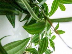plant_9