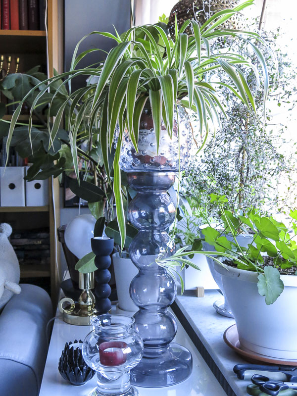 plants and glass