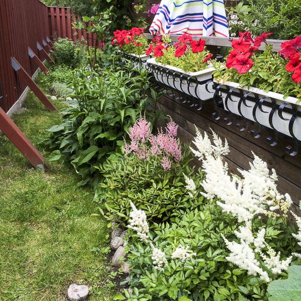 astilbe, garden, greenery
