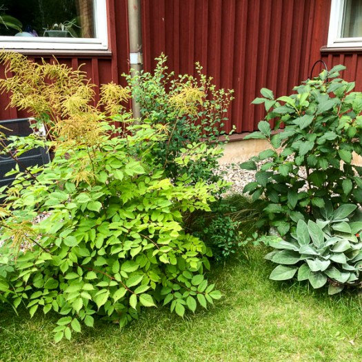 bushes, garden, greenery