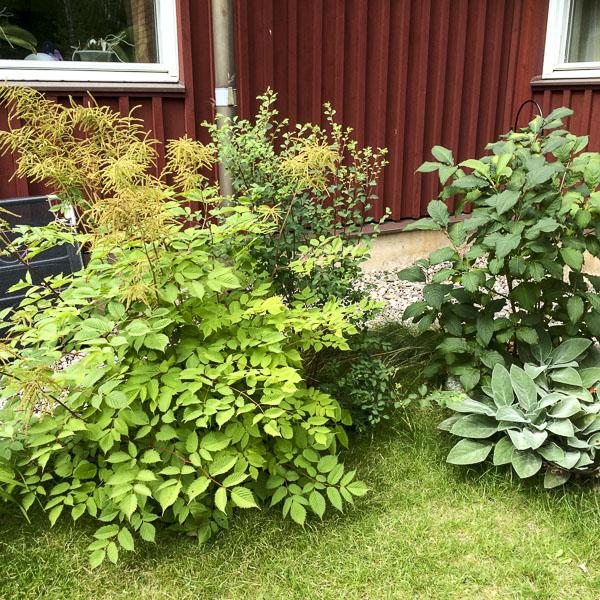 bushes, garden, greenery