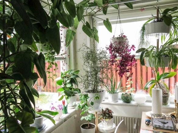 plants, kitchenwindows