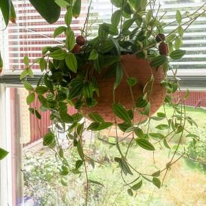 houseplant, kitchenwindow