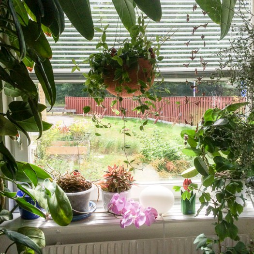 kitchenwindow, houseplants