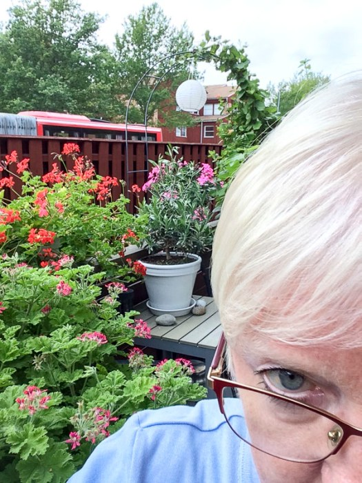 plantselfie, patio, pelargonias
