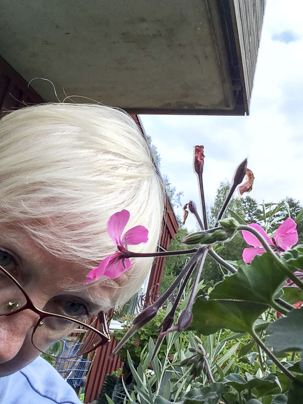 plantselfie, calientepink, nini, pelargonia