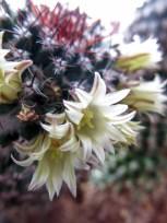cactus2017-04-05