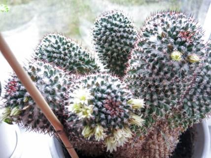 cactus2017-04-05_10