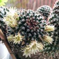 cactus2017-04-05_12