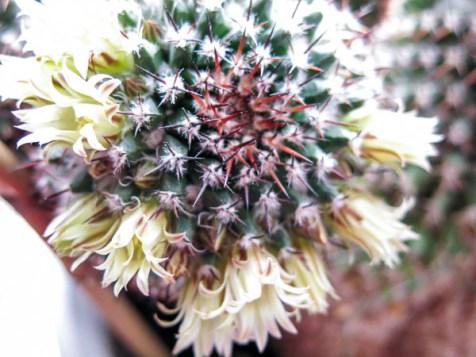 cactus2017-04-05_5