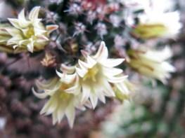 cactus2017-04-05_8