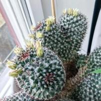cactus2017-04-16_2