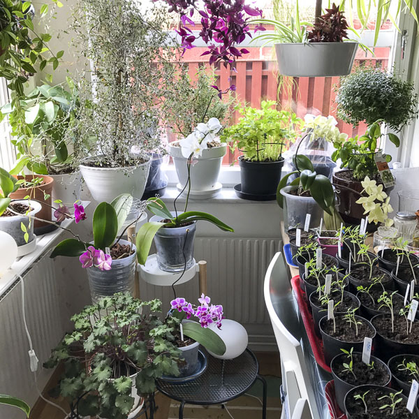 plants, crowded