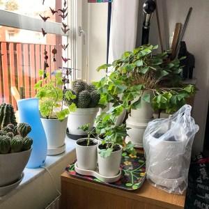 plants, houseplants, new beginnings