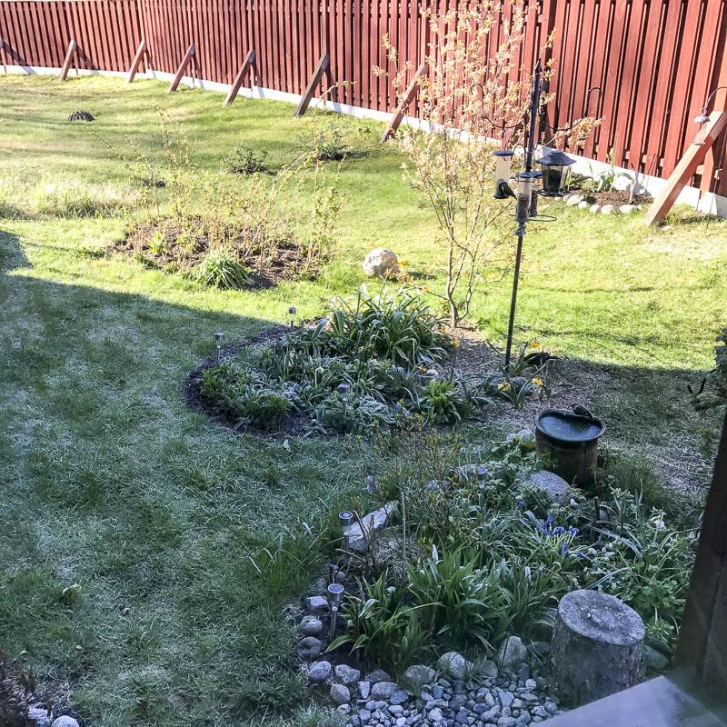frozen, garden