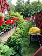 Pelargonias and flowerbed beside my patio