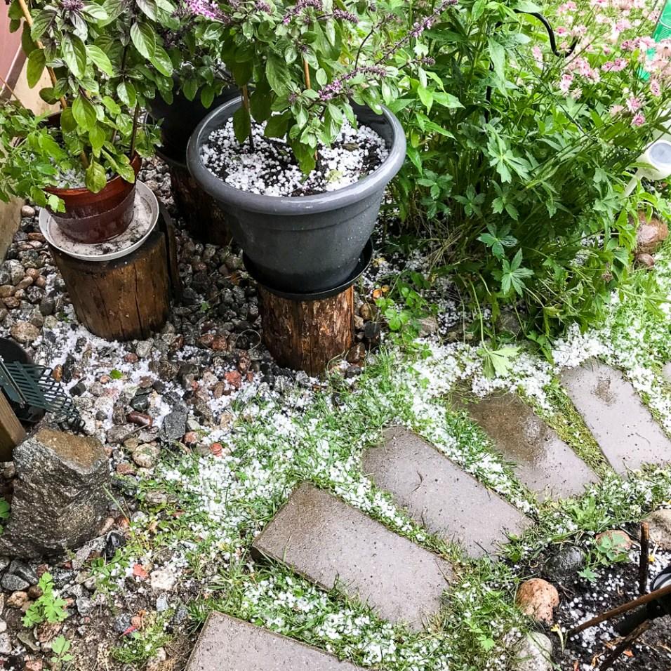 Basil with hail.