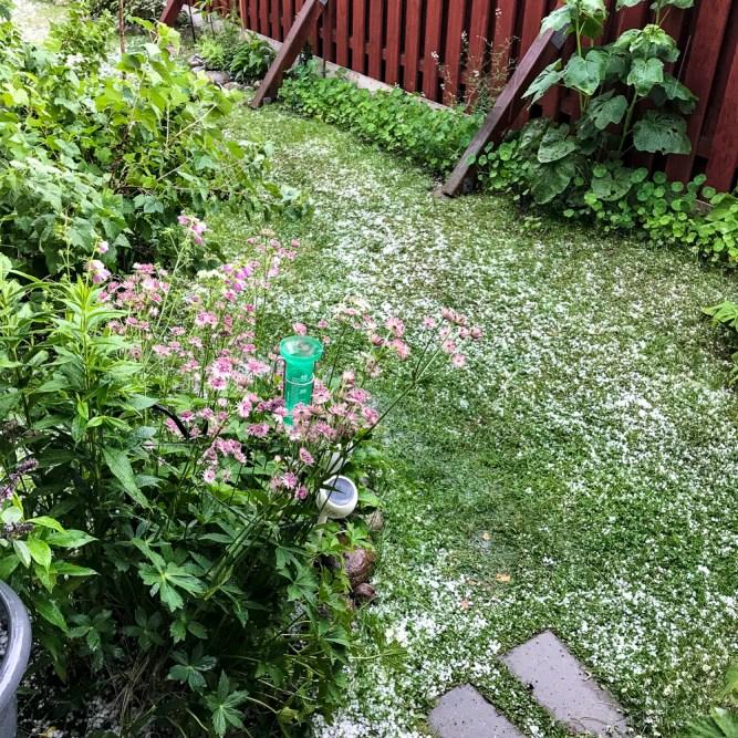 Hail on the grass.