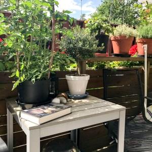 tropicool, patio, tomatoes