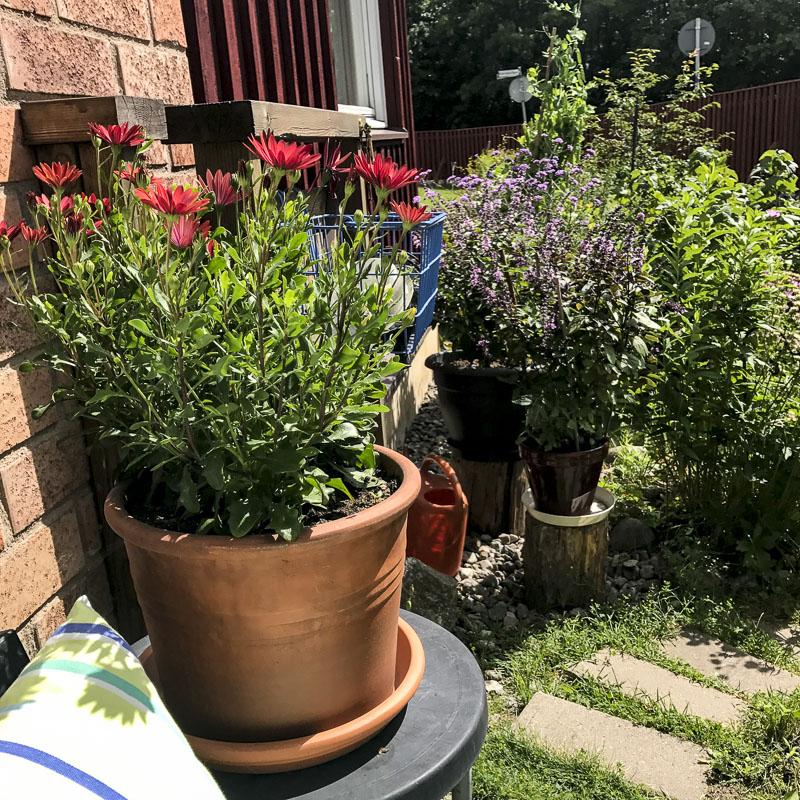 tropicool, patio, pots