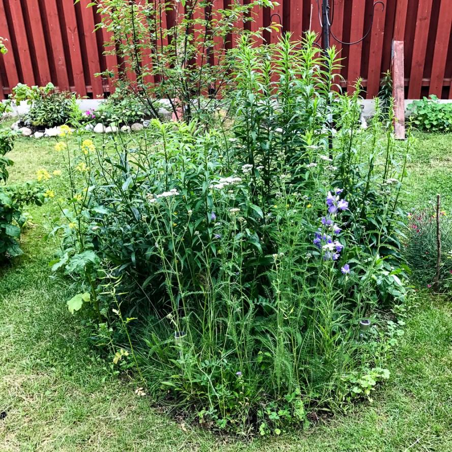 Flowerbed by the bird-feeder