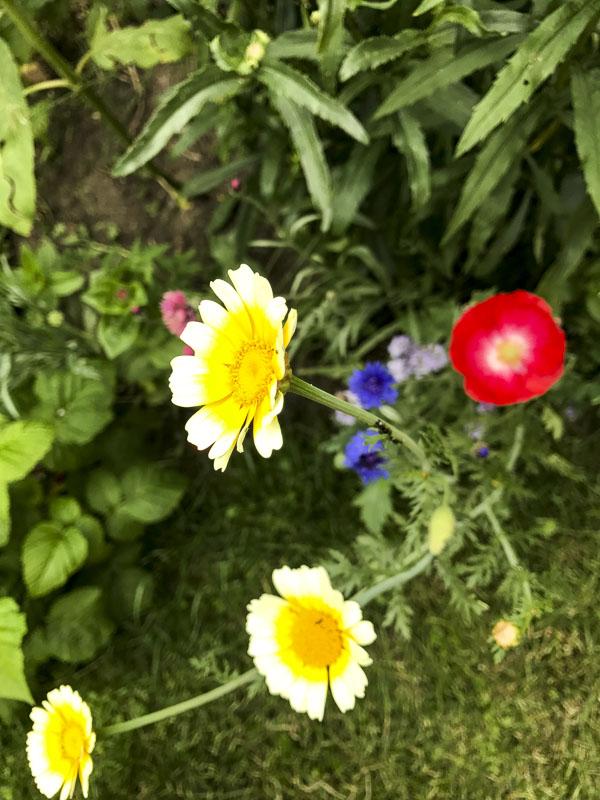 blommor20170716