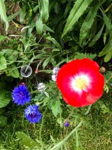 poppy20170716_1