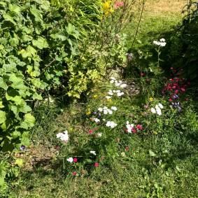 summerflowers20170715