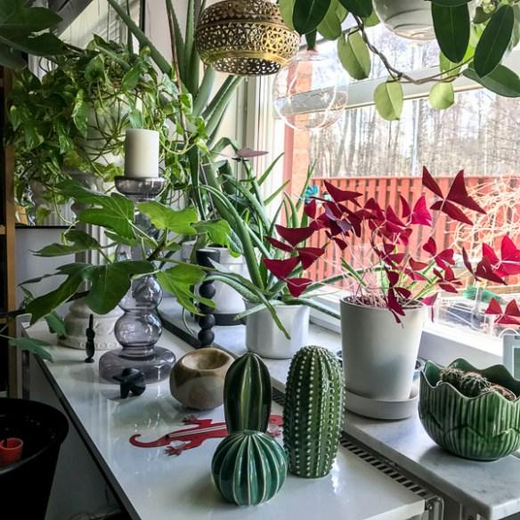 livingroomwindow, livingroom, plants