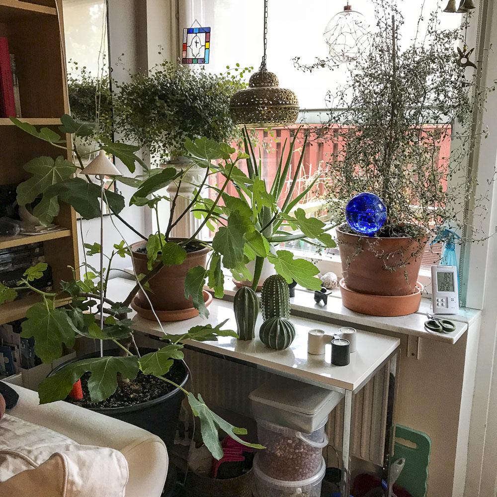 livingroomwindow, livingroom