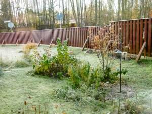 frosty, morning, garden