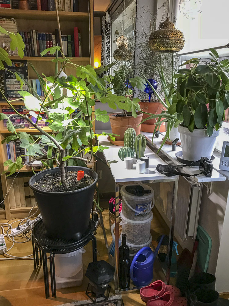 indoorplants, livingroom