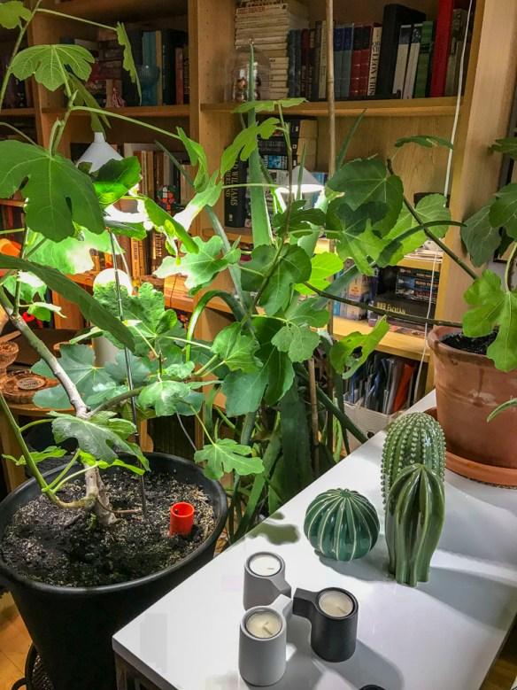 indoorplants, livingroom
