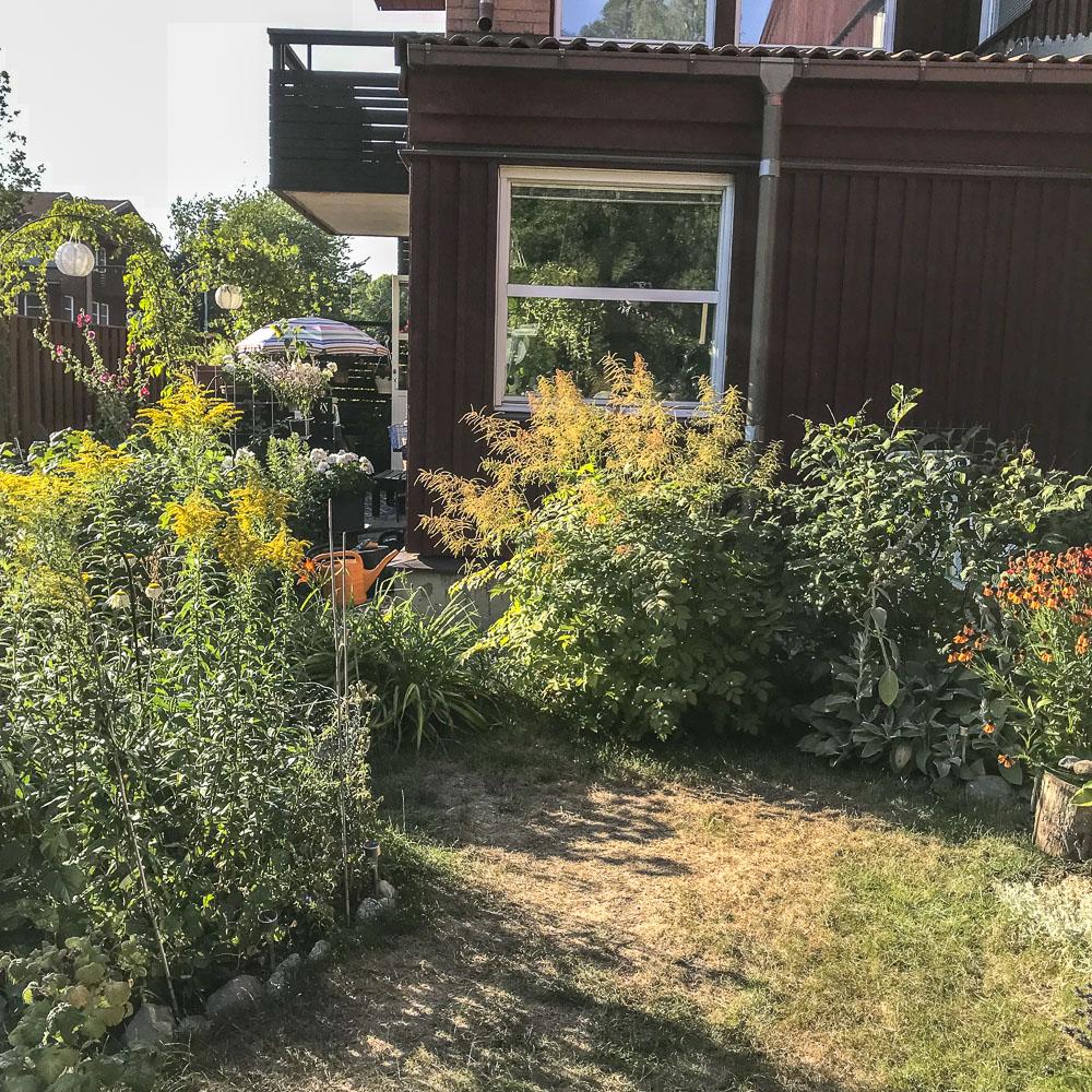 dry, hot, garden
