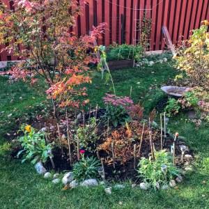 autumn, garden