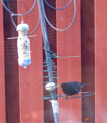 In the feeder