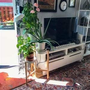 livingroomplants