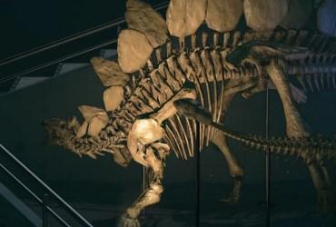 Animal Crossing New Horizons Fossils Screenshot