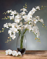 white silk orchids