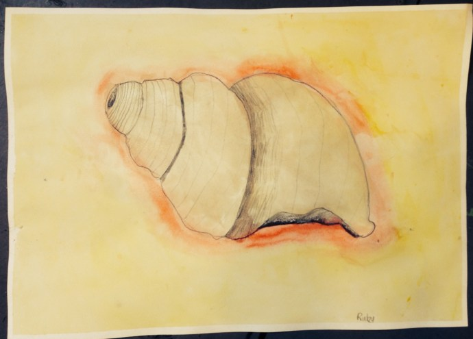 WATERCOLOUR_SHELL_11