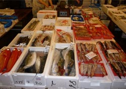Mercato del pesce a Tokyo
