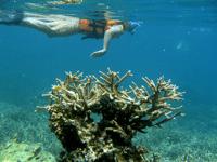Chie snorkeling
