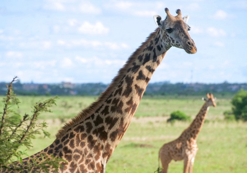 3 Important Things You Should Know Before Booking A Safari In East Africa