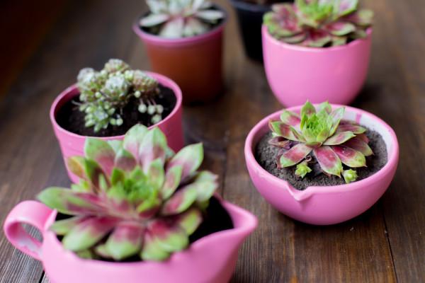 Pink Flower Pots