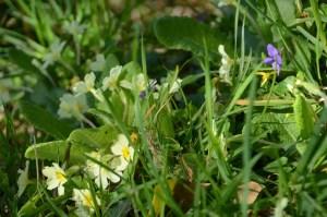 Pour votre santé, mangez des mauvaises herbes !